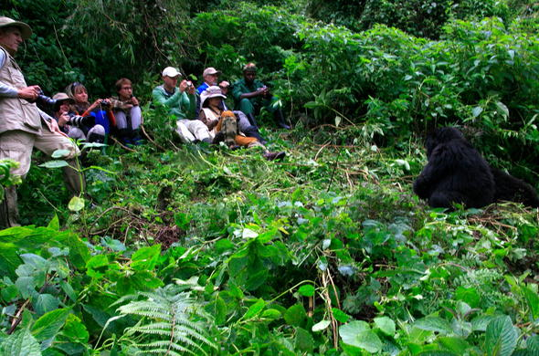 Guests enjoying gorilla trekking at Sabyinyo Silverback Lodge.